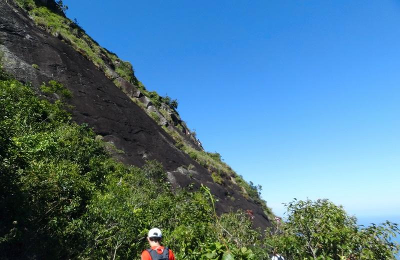 Carrasqueira na trilha da pedra da gávea, Rio de Janeiro