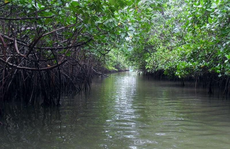 Passeio no mangue nas Dunas de Marapé, no litoral sul de Alagoas
