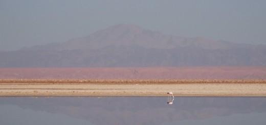 Flamingos no Salar de Atacama
