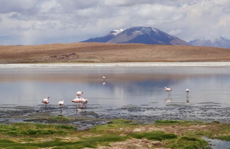 Laguna Cañapa, no tour do Salar de Uyuni