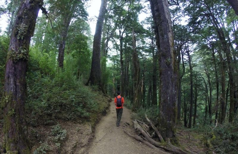 Trilha no Parque Nacional Huerquehue