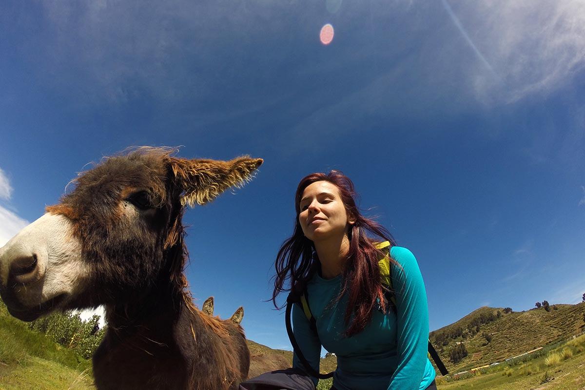 Burro na Isla de Sol, Bolívia