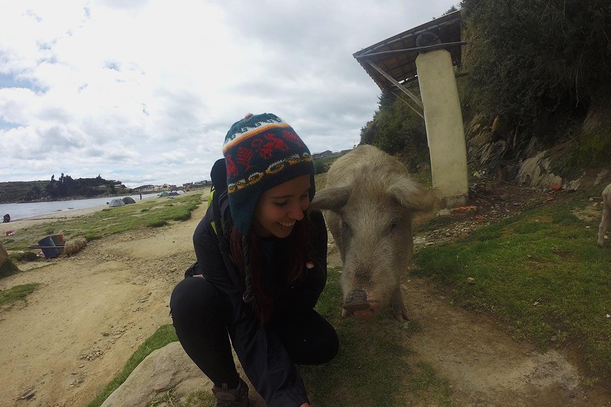 Porco na Isla del Sol, Bolívia