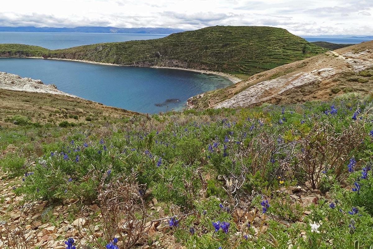 Praia e flores na Isla del Sol, Bolívia
