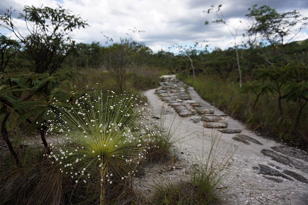 Trilha no Parque Nacional da Chapada dos Veadeiros