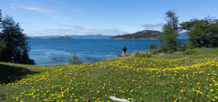 Flores no Parque Nacional do Parque Nacional Tierra del Fuego, Ushuaia